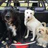 Joan: Experienced Dog Walker, Kinsale's