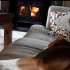 Ruth: Home-From-Home Home Boarding, Pet Sitting & Dog Walking in Enniskerry