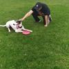 Juan: El perro sabe, pero no sabe que sabe!!!