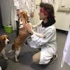 Amaury: Étudiant vétérinaire passionné