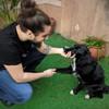 Alex: El mejor cuidado para tus perros