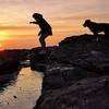 Creniaut: Dog Sitter à Duneau, maître d'un super Border Collie et d'un merveilleux chat !