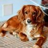 Tania: Cuidadora de Perros en Benalmádena Costa/ Dog sitter in Benalmádena Costa