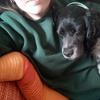 Mar: Cuidadora de perros en Granada