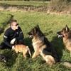 Cillian: Happy hackney hounds 🐾🐶