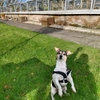 Saul: Animal carer and boarder - Dog walking, running and grooming