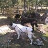 Alain: Paseador de perros en Las Rozas de Madrid