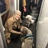 Sofie: Dog sitter and walker in Edinburgh