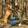 Juliette: Dog sitter à Tournefeuille