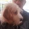 Jorge: Paseador de perros sur de tenerife