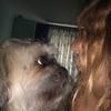 Eleonora: Dog sitter in London