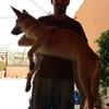 Pablo: Paseando con perros