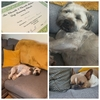 Hannah: Professional Dog Boarding, Grooming, Walking and Sitting Services in Stockport