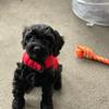 Rachael: Dog sitter in Halling