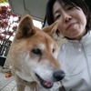 Chiho: Paseo a perro