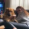 Kara: Dog sitter in Glasgow