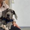 Elina: Liebevolle Hundbetreuung im Raum Augsburg
