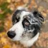 Konstanze: Hundesitter in Augsburg