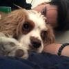 Doruk: Dog sitter in Manchester