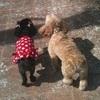 Stephanie: Un chien content est un chien sage.