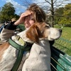 Juliette: Dog sitter in Levallois-Perret