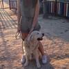 Marina: Paseadora de perros en Villaviciosa de Odón. Servicio individual o compartido. Máximo dos horas de paseo.