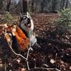 Annabell: Hundesitter in München