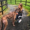Sarah: Dog Walker/Sitter in Limerick