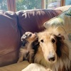 Sophie : Dog Walker Cork
