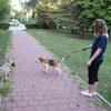 Ines: Walking pawz, dog sitter in Edinburgh