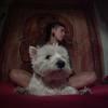 Paloma: Vacaciones para ti y también para tu perro!