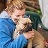 Anne Laure: Paradis des chiens