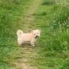 Shar: Dog sitter in Tallaght