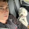 John: Dog sitting and grooming in Portlaoise