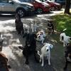 Andika: Vacaciones activas con pareja joven y sus perros en Donostia - San Sebastián