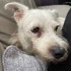 Chloe: Petcare services