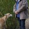 Carlos: Cuidador de perros Nuevo Baztán y alrededores.
