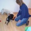 Mari Carmen: Cuidadora de perros en Barcelona