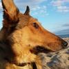 Gemma: Educadora canina 24h al servicio de tu mascota