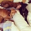 Estefania: Galgos + perros miedosos + perros mayores