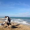 Stefano: Alessia y Stefano para tu perro en Barcelona