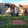 Beatriz: Cuidadora, estudiante veterinaria Casetas, Zaragoza