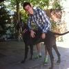 Rodrigo Manuel: La segunda casa para tu perro!!