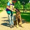 Mauro: Servicios especializados en educación,paseos y cuidados de perros.