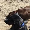Carmen: El segundo hogar para tu mascota