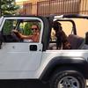 Carmen: Cuidadora de perros en zaragoza en zona magnifica