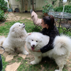 Jade : Bien plus qu'une Dog-Sitter !