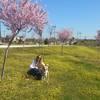 Nuria: Paseadora de perros en Móstoles