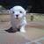 Slider_thumb_bruno-lola_020