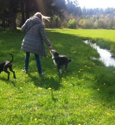 Slider hundespaziergang